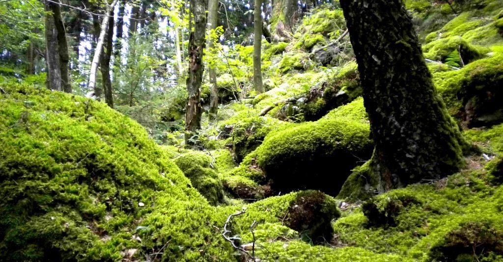 Wald-Visionssuche